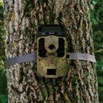 Linda Grover - Trail Cam pic 3