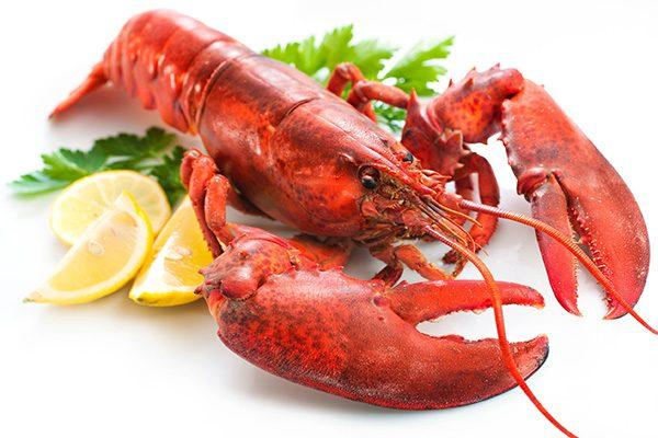 lobster web